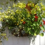Bountiful wall planter