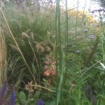 Glorious grasses and perennials