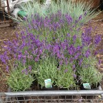 Plants for Hove planting design