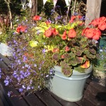 Hot summer pots for the poolside bench