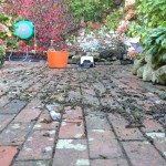 Cleaning up the bricks